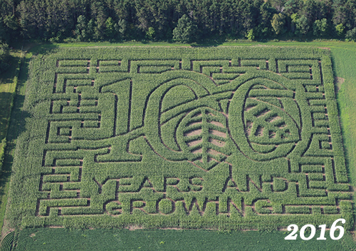 100 years of Waldoch Farm in a Corn Maze