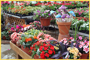 Fresh Flowers at Waldoch Garden Center