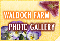 Visit the Waldoch Farm Online Photo Gallery